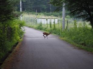 小鹿.jpg